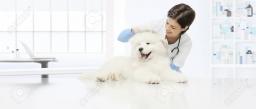 90215898-veterinäruntersuchungshundtierarzt-überprüft-den-ohrhunden-auf-dem-tisch-in-der-tierarztklinik-.jpg