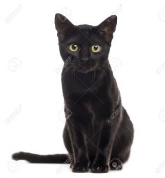 52988556-schwarze-katze-kätzchen-in-die-kamera-schaut-isoliert-auf-weiß